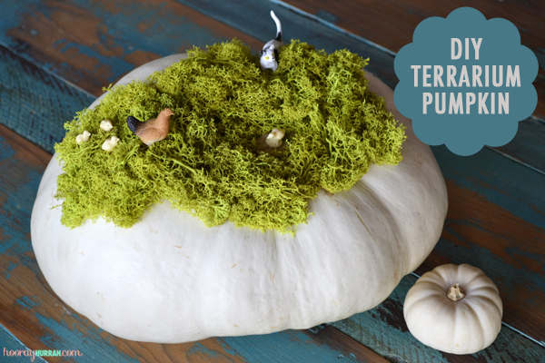 diy-terrarium-no-carve-terrarium-pumpkin-1