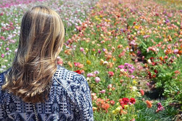 Carlsbad-Flower-Fields-7